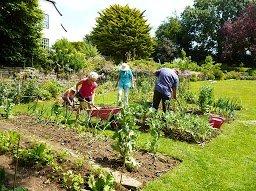 gardening-july 2013