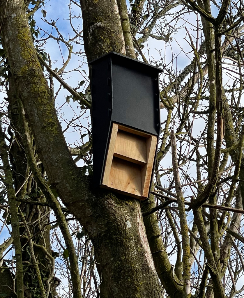 A bat box on one of the trees on the Hazelemead site boundary